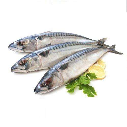 ماهی شیر پولکی