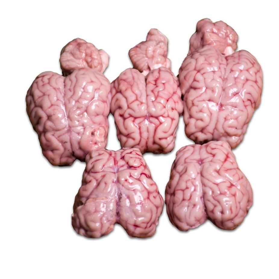 مغز گوسفندی